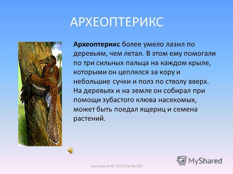 Куликова И.Ю. ГОУ СОШ 929 К УРОКУ ОКРУЖАЮЩИЙ МИР