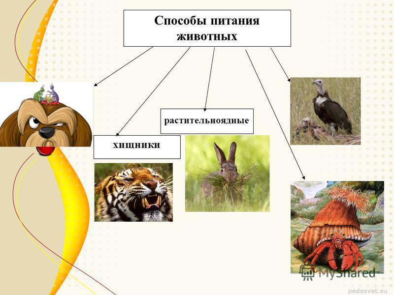 Способы питания животных растительноядные хищники