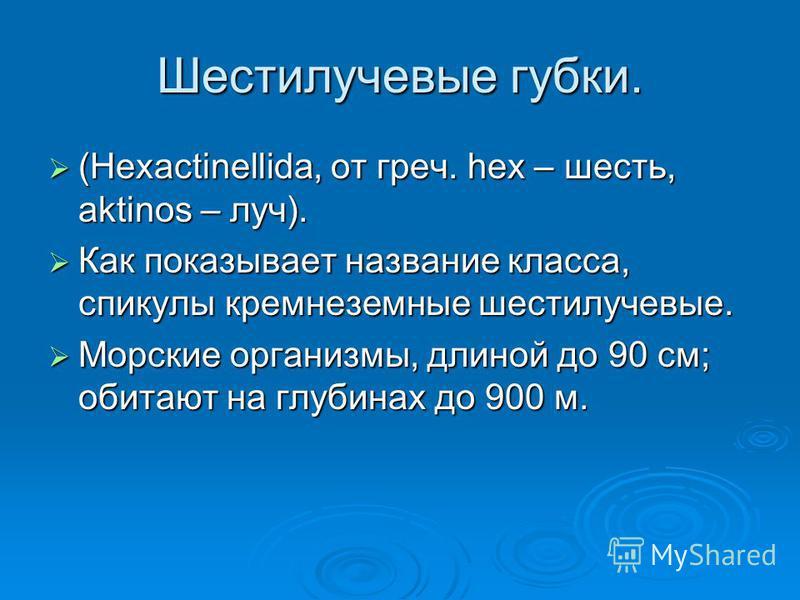 Шестилучевые губки. (Hexactinellida, от греч. hex – шесть, aktinos – луч). (Hexactinellida, от греч. hex – шесть, aktinos – луч). Как показывает название класса, спикулы кремнеземные шестилучевые. Как показывает название класса, спикулы кремнеземные