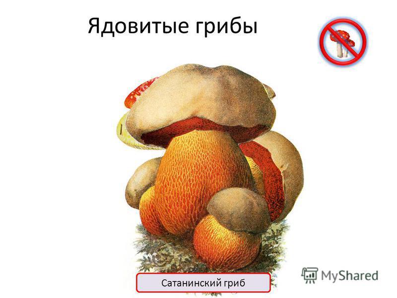 Шляпочные грибы Ядовитые Съедобные