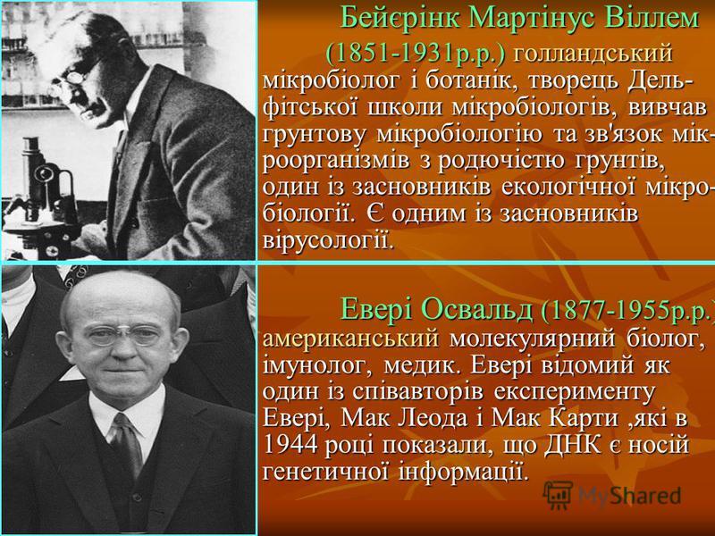 Бейєрінк Мартінус Віллем Бейєрінк Мартінус Віллем (1851-1931р.р.) голландський мікробіолог і ботанік, творець Дель- фітської школи мікробіологів, вивчав грунтову мікробіологію та зв'язок мік- роорганізмів з родючістю грунтів, один із засновників екол