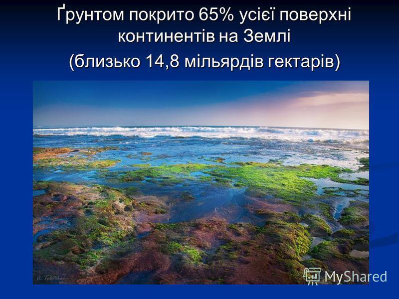 Ґрунтом покрито 65% усієї поверхні континентів на Землі (близько 14,8 мільярдів гектарів)
