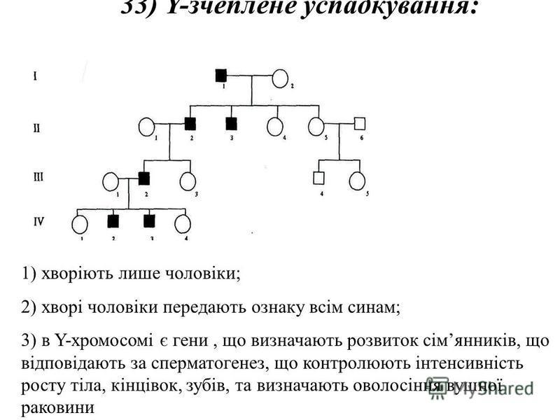 33) Y-зчеплене успадкування: 1) хворіють лише чоловіки; 2) хворі чоловіки передають ознаку всім синам; 3) в Y-хромосомі є гени, що визначають розвиток сімянників, що відповідають за сперматогенез, що контролюють інтенсивність росту тіла, кінцівок, зу