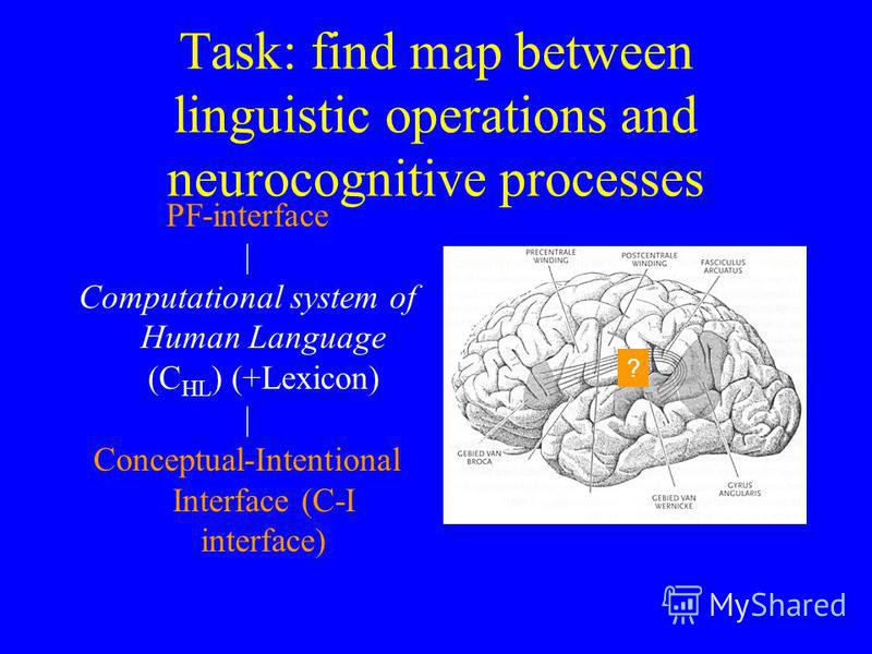 Task: find map between linguistic operations and neurocognitive processes PF-interface | Computational system of Human Language (C HL ) (+Lexicon) | Conceptual-Intentional Interface (C-I interface) ?