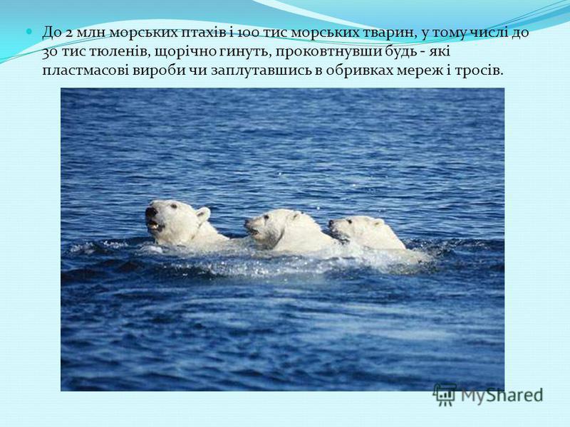 До 2 млн морських птахів і 100 тис морських тварин, у тому числі до 30 тис тюленів, щорічно гинуть, проковтнувши будь - які пластмасові вироби чи заплутавшись в обривках мереж і тросів.