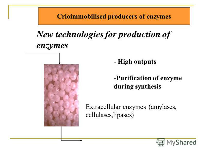 Crioimmobilised producers of enzymes New technologies for production of enzymes - High outputs -Purification of enzyme during synthesis Extracellular enzymes (amylases, cellulases,lipases)