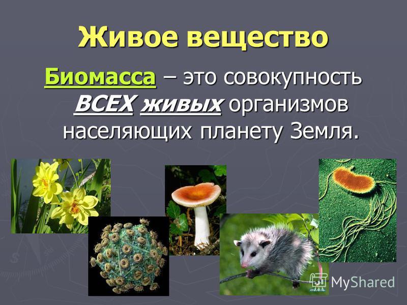 Живое вещество Биомасса – это совокупность ВСЕХ живых организмов населяющих планету Земля.