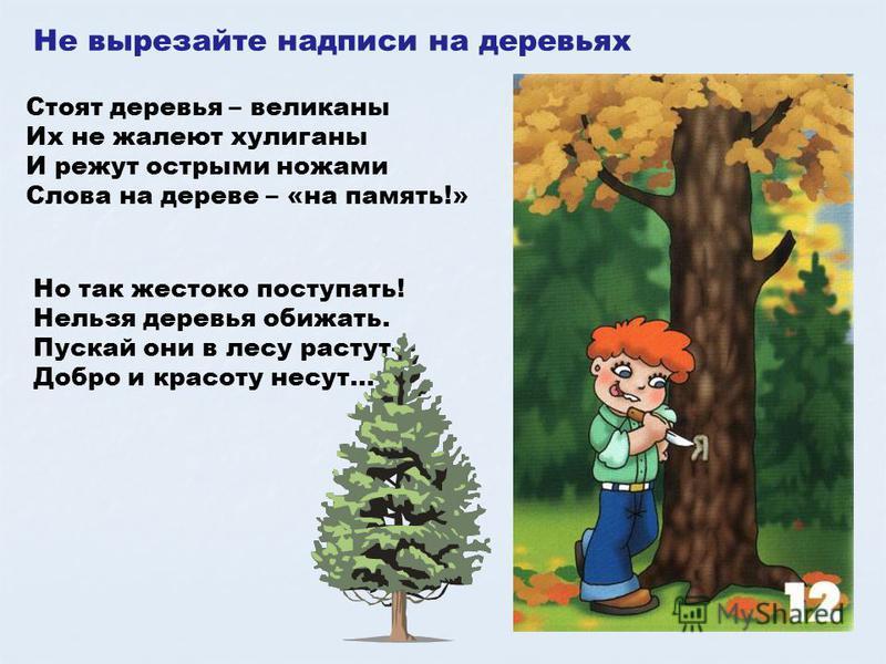 Не вырезайте надписи на деревьях Стоят деревья – великаны Их не жалеют хулиганы И режут острыми ножами Слова на дереве – «на память!» Но так жестоко поступать! Нельзя деревья обижать. Пускай они в лесу растут- Добро и красоту несут…
