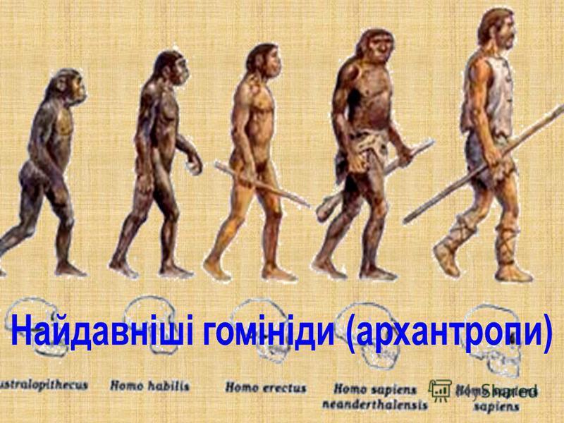 Картинки по запросу «Людина прямоходяча» - Homo Erectus
