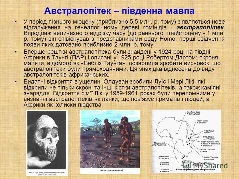 Австралопітек – південна мавпа У період пізнього міоцену (приблизно 5,5 млн. р. тому) зявляється нове відгалуження на генеалогічному дереві гомінідів - австралопітек. Впродовж величезного відрізку часу (до раннього плейстоцену - 1 млн. р. тому) він с