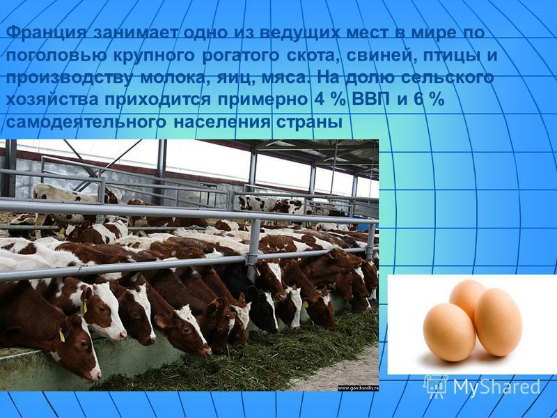 Франция занимает одно из ведущих мест в мире по поголовью крупного рогатого скота, свиней, птицы и производству молока, яиц, мяса. На долю сельского хозяйства приходится примерно 4 % ВВП и 6 % самодеятельного населения страны