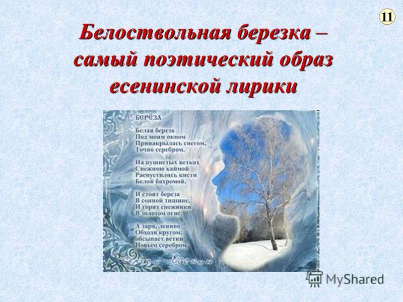 Белоствольная березка – самый поэтический образ есенинской лирики 11