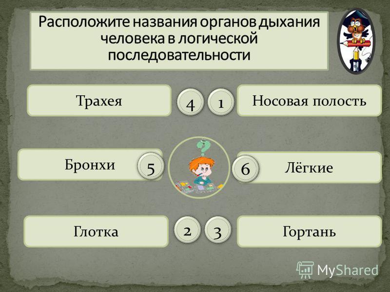 Носовая полость Гортань Трахея Глотка Бронхи Лёгкие 11 44 66 55 2233