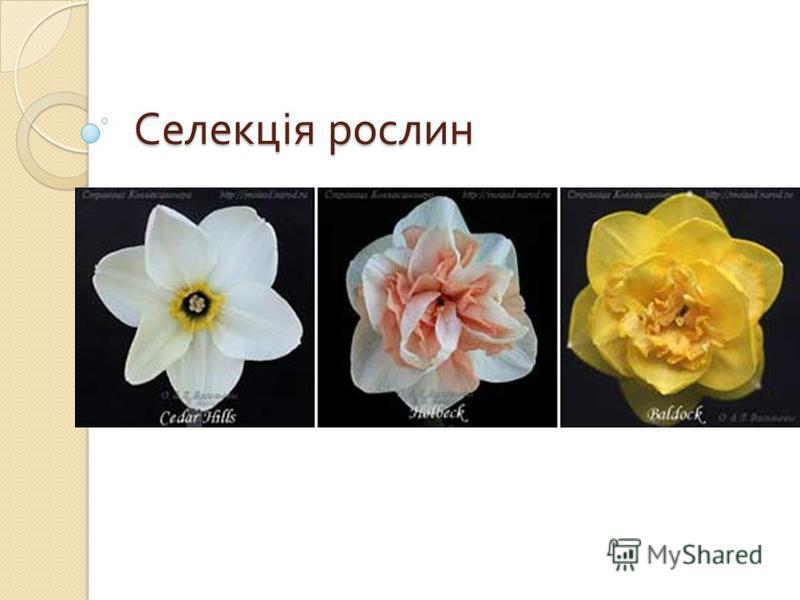 Селекція рослин