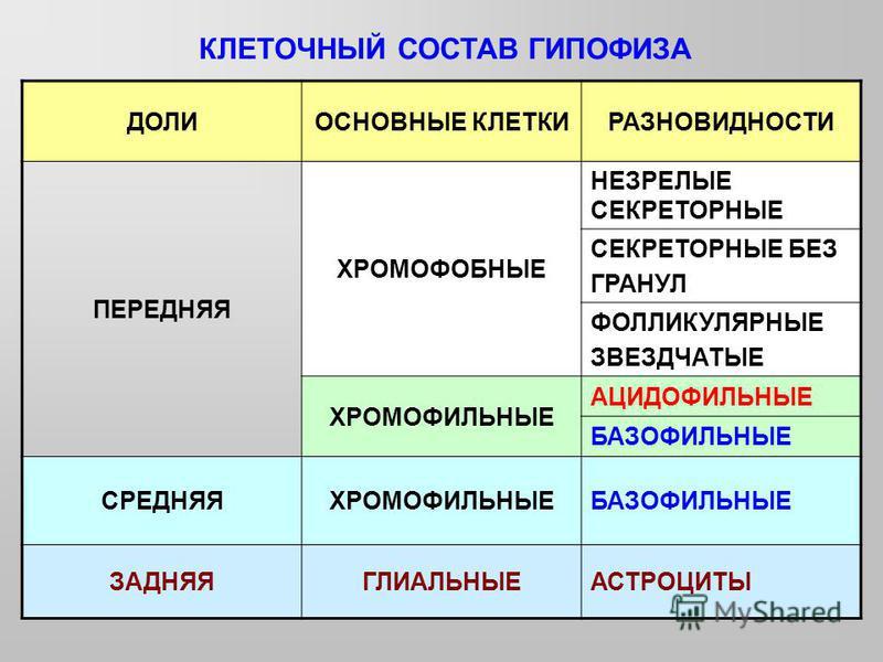 КЛЕТОЧНЫЙ СОСТАВ ГИПОФИЗА ДОЛИОСНОВНЫЕ КЛЕТКИРАЗНОВИДНОСТИ ПЕРЕДНЯЯ ХРОМОФОБНЫЕ НЕЗРЕЛЫЕ СЕКРЕТОРНЫЕ СЕКРЕТОРНЫЕ БЕЗ ГРАНУЛ ФОЛЛИКУЛЯРНЫЕ ЗВЕЗДЧАТЫЕ ХРОМОФИЛЬНЫЕ АЦИДОФИЛЬНЫЕ БАЗОФИЛЬНЫЕ СРЕДНЯЯХРОМОФИЛЬНЫЕБАЗОФИЛЬНЫЕ ЗАДНЯЯГЛИАЛЬНЫЕАСТРОЦИТЫ