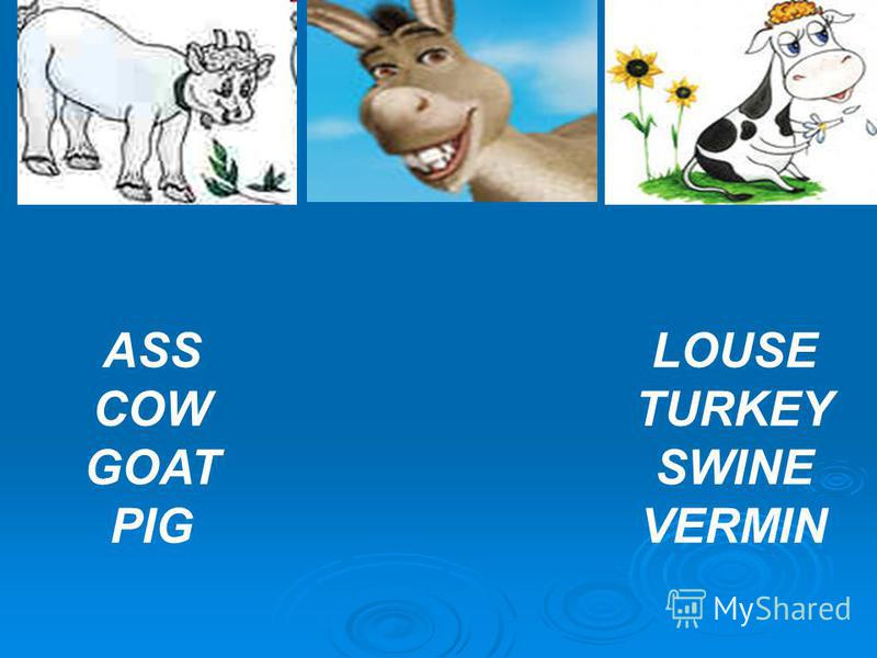 ASS COW GOAT PIG LOUSE TURKEY SWINE VERMIN