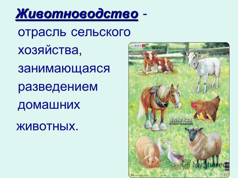 Животноводство Животноводство - отрасль сельского хозяйства, занимающаяся разведением домашних животных.