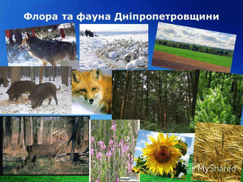 www.themegallery.com Company Logo Флора та фауна Дніпропетровщини