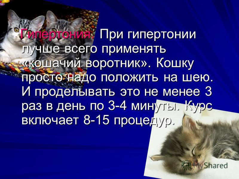 Гипертония. При гипертонии лучше всего применять «кошачий воротник». Кошку просто надо положить на шею. И проделывать это не менее 3 раз в день по 3-4 минуты. Курс включает 8-15 процедур. Гипертония. При гипертонии лучше всего применять «кошачий воро