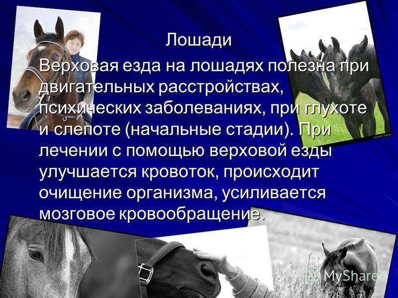 Лошади Верховая езда на лошадях полезна при двигательных расстройствах, психических заболеваниях, при глухоте и слепоте (начальные стадии). При лечении с помощью верховой езды улучшается кровоток, происходит очищение организма, усиливается мозговое к