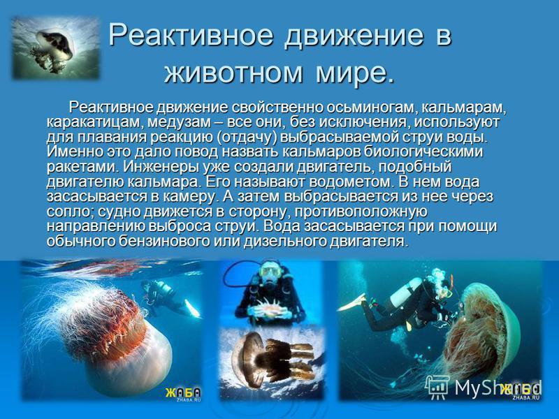 Реактивное движение в животном мире. Реактивное движение свойственно осьминогам, кальмарам, каракатицам, медузам – все они, без исключения, используют для плавания реакцию (отдачу) выбрасываемой струи воды. Именно это дало повод назвать кальмаров био