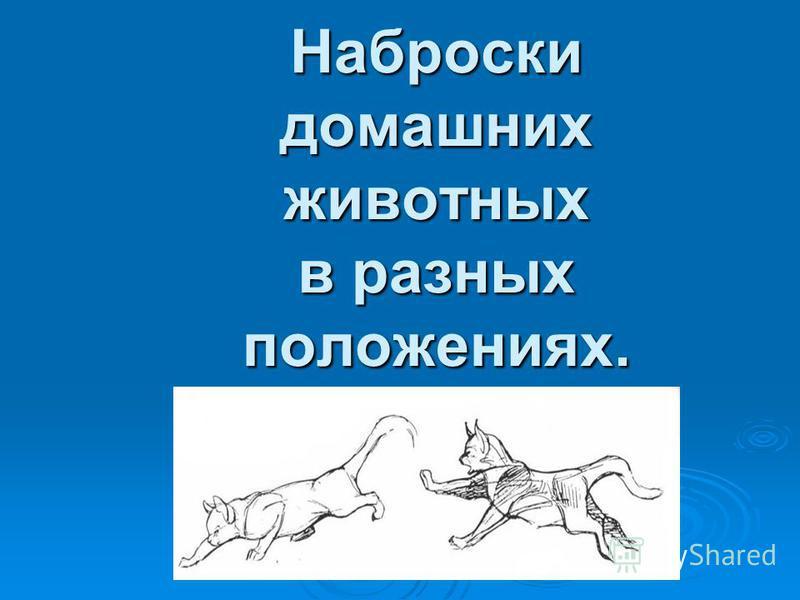 Наброски домашних животных в разных положениях.