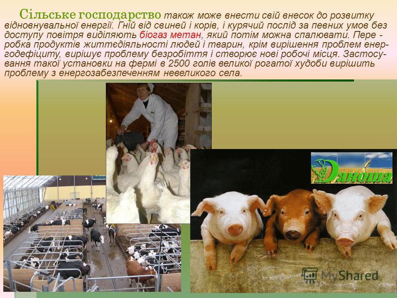 Сільське господарство також може внести свій внесок до розвитку відновнувальної енергії. Гній від свиней і корів, і курячий послід за певних умов без доступу повітря виділяють біогаз метан, який потім можна спалювати. Пере - робка продуктів життєдіял