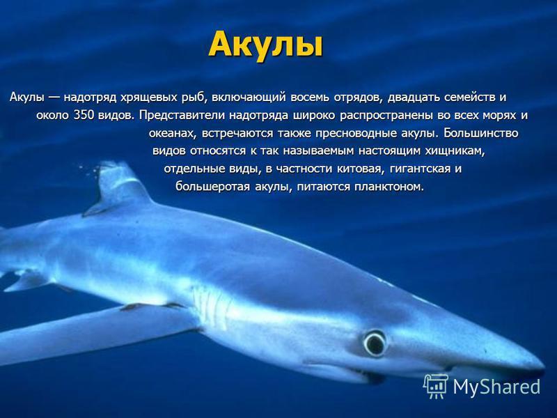Акулы Акулы надотряд хрящевых рыб, включающий восемь отрядов, двадцать семейств и Акулы надотряд хрящевых рыб, включающий восемь отрядов, двадцать семейств и около 350 видов. Представители надотряда широко распространены во всех морях и около 350 вид