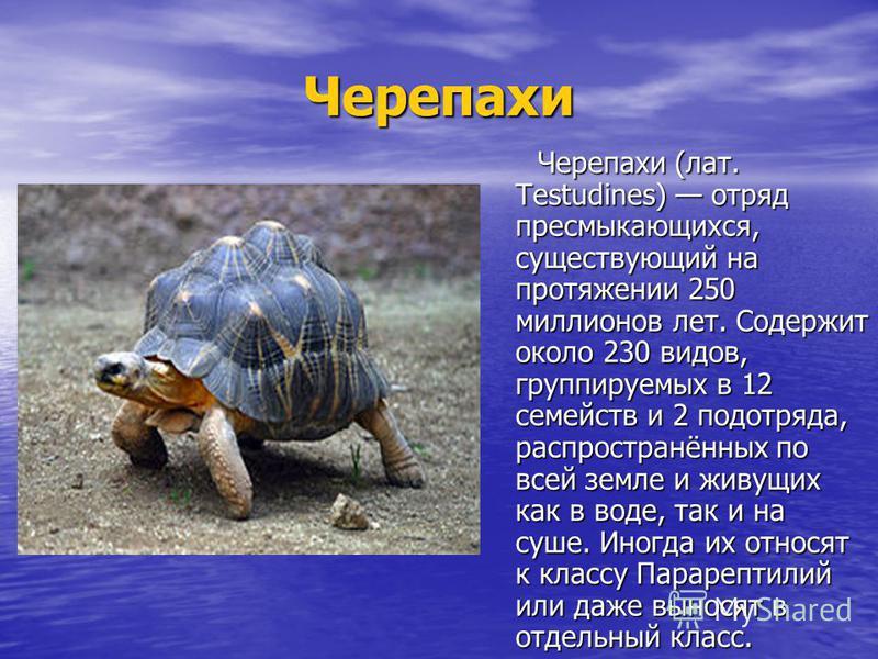 Черепахи Черепахи (лат. Testudines) отряд пресмыкающихся, существующий на протяжении 250 миллионов лет. Содержит около 230 видов, группируемых в 12 семейств и 2 подотряда, распространённых по всей земле и живущих как в воде, так и на суше. Иногда их