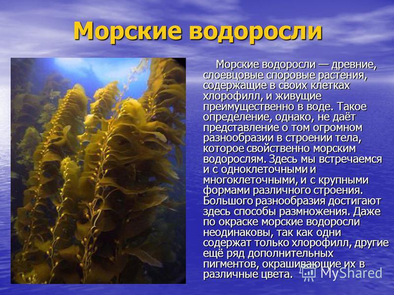 Морские водоросли Морские водоросли древние, слоевцовые споровые растения, содержащие в своих клетках хлорофилл, и живущие преимущественно в воде. Такое определение, однако, не даёт представление о том огромном разнообразии в строении тела, которое с