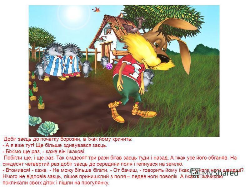 Пробіг їжак кілька кроків, а потім тихенько повернувся на своє місце і сів відпочивати. А заєць усе біжить та й біжить. Добіг до кінця своєї борозни, а тут їжачиха гукає: - А я вже тут! Треба сказати, що їжак і їжачиха дуже схожі один на одного. Здив