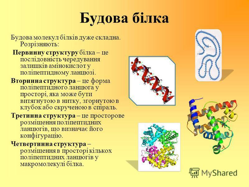 Будова білка Будова молекул білків дуже складна. Розрізняють: Первинну структуру білка – це послідовність чередування залишків амінокислот у поліпептидному ланцюзі. Вторинна структура – це форма поліпептидного ланцюга у просторі, яка може бути витягн