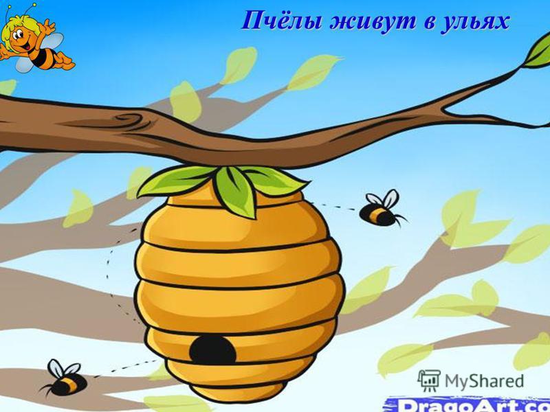 Пчёлы живут в ульях