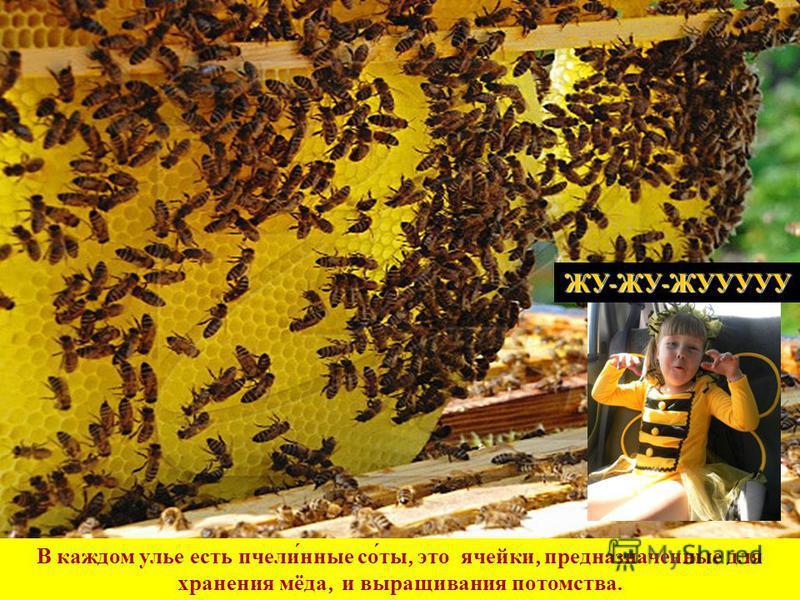 В каждом улье есть пчел и́иные со́ты, это ячейки, предназначеиные для хранения мёда, и выращивания потомства. ЖУ - ЖУ - ЖУУУУУ