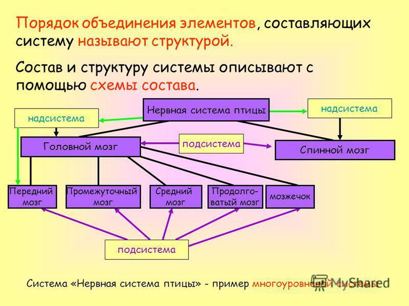 Порядок объединения элементов, составляющих систему называют структурой. Состав и структуру системы описывают с помощью схемы состава. Головной мозг Спинной мозг Передний мозг Промежуточный мозг Средний мозг Продолго- ватый мозг мозжечок Система «Нер