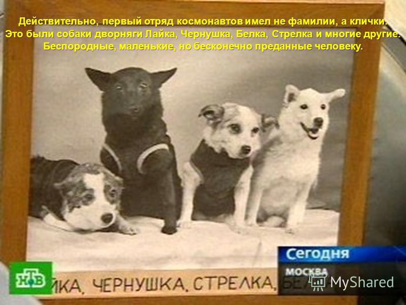 Действительно, первый отряд космонавтов имел не фамилии, а клички. Это были собаки дворняги Лайка, Чернушка, Белка, Стрелка и многие другие. Беспородные, маленькие, но бесконечно преданные человеку.