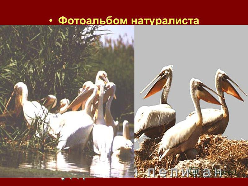 Фотоальбом натуралиста