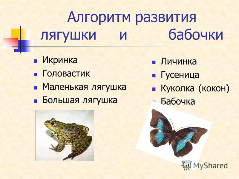 Алгоритм развития лягушки и бабочки Икринка Головастик Маленькая лягушка Большая лягушка Личинка Гусеница Куколка (кокон) Бабочка