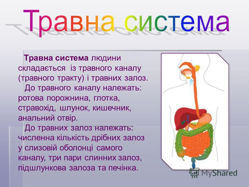 Травна система людини складається із травного каналу (травного тракту) і травних залоз. До травного каналу належать: ротова порожнина, глотка, стравохід, шлунок, кишечник, анальний отвір. До травних залоз належать: численна кількість дрібних залоз у