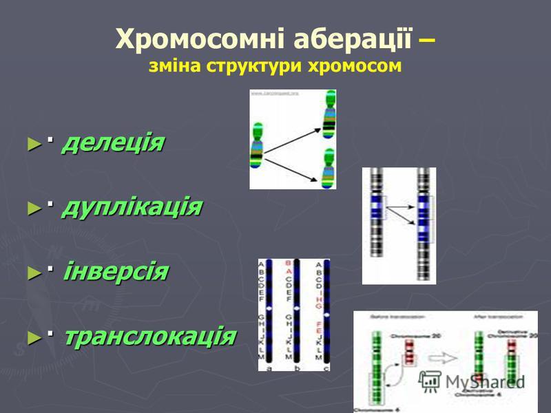 Класифікація мутаційної мінливості: Геномні мутації – зміна кількості хромосом в каріотипі Геномні мутації – зміна кількості хромосом в каріотипі Поліплоїдія Поліплоїдія · Мейотична поліплоїдія · Зиготична поліплоїдія · Мейотична поліплоїдія · Зиготи