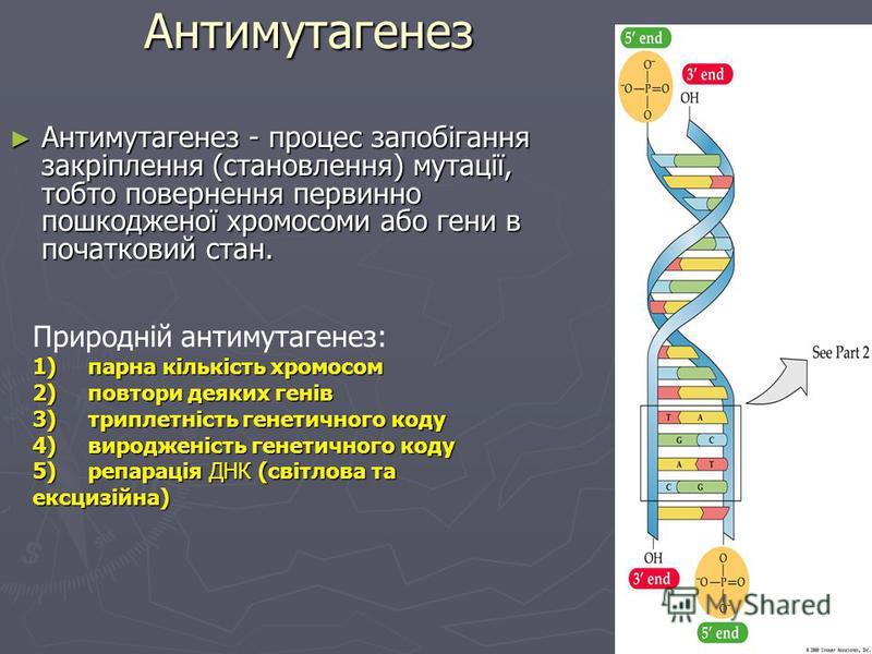 Хромосомні аберації – зміна структури хромосом · делеція · делеція · дуплікація · дуплікація · інверсія · інверсія · транслокація · транслокація