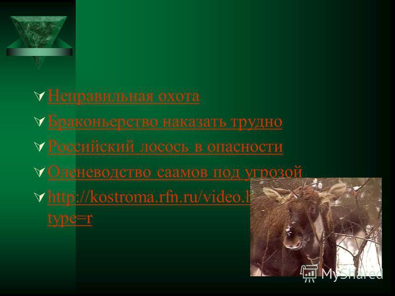 Неправильная охота Браконьерство наказать трудно Российский лосось в опасности Оленеводство саамов под угрозой http://kostroma.rfn.ru/video.html?id=2985& type=r http://kostroma.rfn.ru/video.html?id=2985& type=r