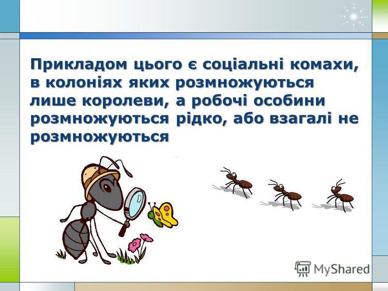 Прикладом цього є соціальні комахи, в колоніях яких розмножуються лише королеви, а робочі особини розмножуються рідко, або взагалі не розмножуються