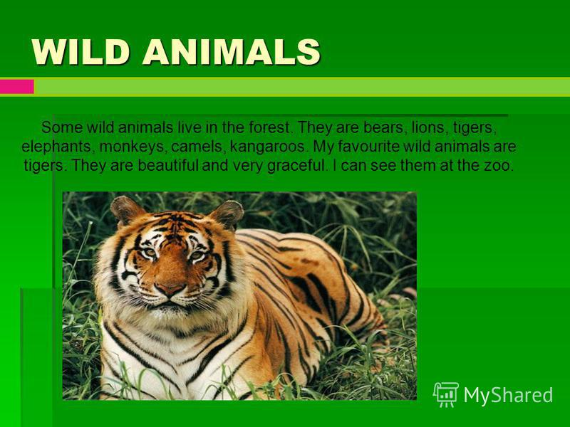 my favorite animal tiger My favourite animal i like dogs best dogs are mammals they are mostly kept as pets in houses they make good companions for both children and adults dogs are.