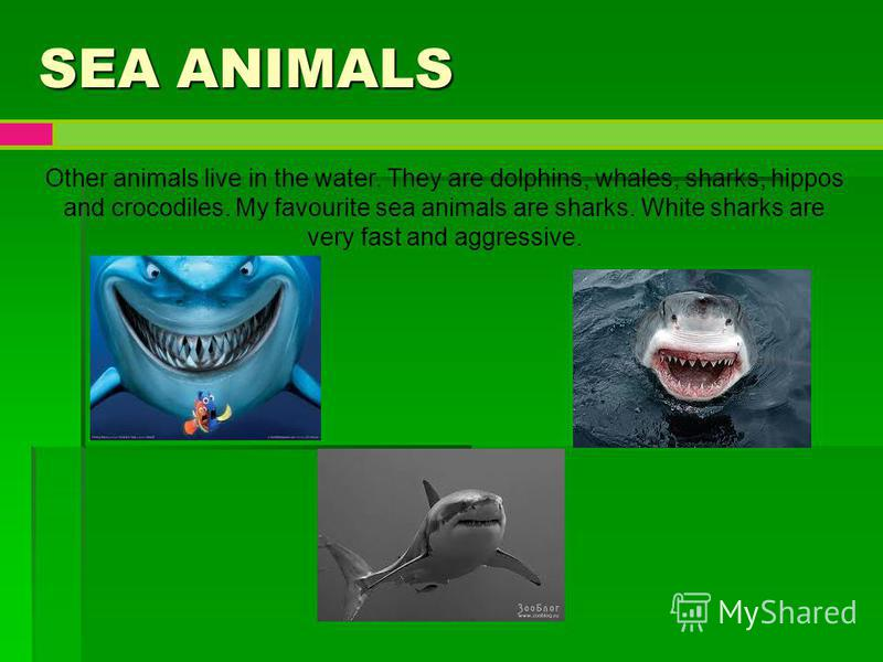SEA ANIMALS Other animals live in the water. They are dolphins, whales, sharks, hippos and crocodiles. My favourite sea animals are sharks. White sharks are very fast and aggressive.