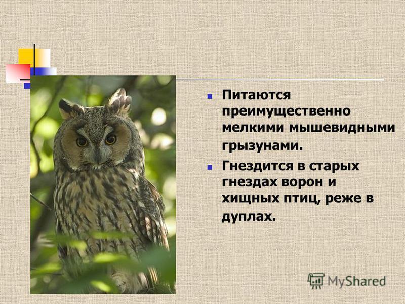 Питаются преимущественно мелкими мышевидными грызунами. Гнездится в старых гнездах ворон и хищных птиц, реже в дуплах.