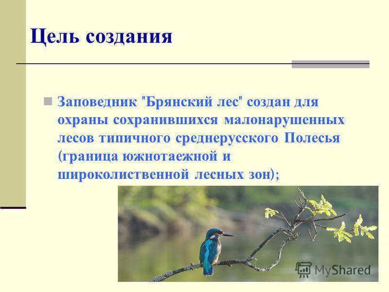 Цель создания Заповедник  Брянский лес  создан для охраны сохранившихся малонарушенных лесов типичного среднерусского Полесья ( граница южно таежной и широколиственной лесных зон );