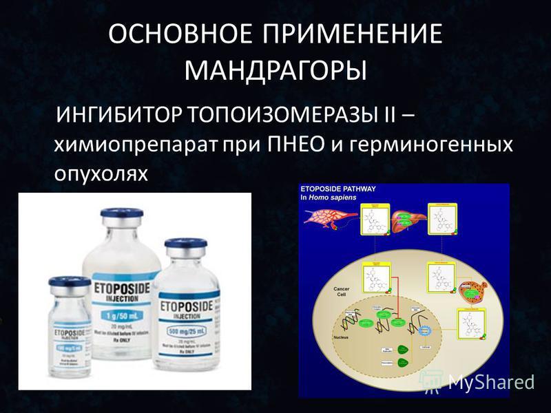 ОСНОВНОЕ ПРИМЕНЕНИЕ МАНДРАГОРЫ ИНГИБИТОР ТОПОИЗОМЕРАЗЫ II – химиопрепарат при ПНЕО и герминогенных опухолях