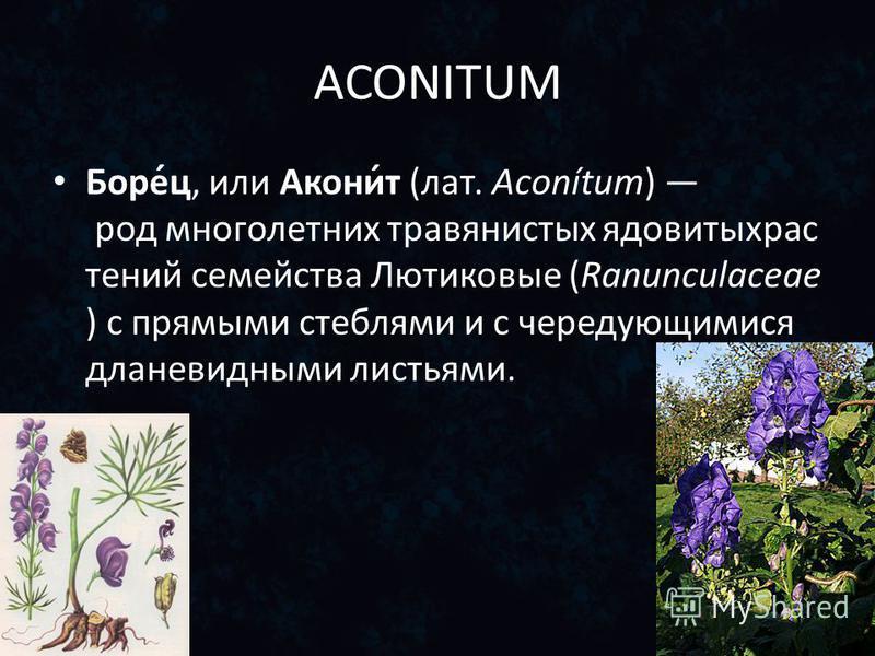ACONITUM Боре́ц, или Акони́т (лат. Aconítum) род многолетних травянистых ядовитыхрас тений семейства Лютиковые (Ranunculaceae ) с прямыми стеблями и с чередующимися дланевидными листьями.