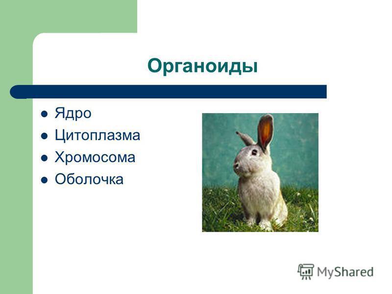 Органоиды Ядро Цитоплазма Хромосома Оболочка